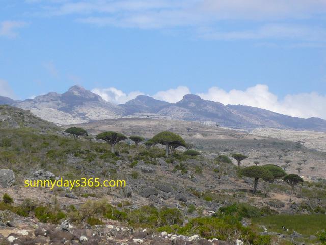 龍血樹群生地からハギール山脈を望む