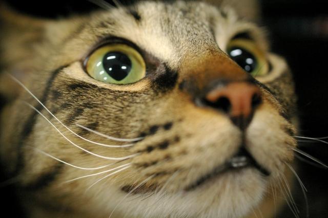 蛍光灯の光が何本も反射している猫の目