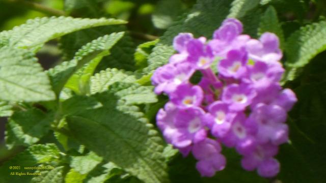 ピントがボケた花の写真
