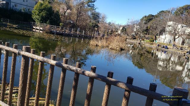 水平が取れていない公園の池のスナップ画