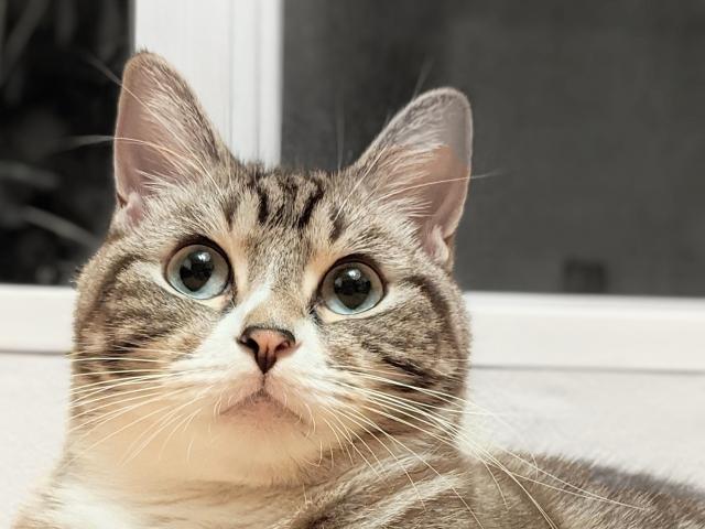 光の反射でキラキラした目になった猫