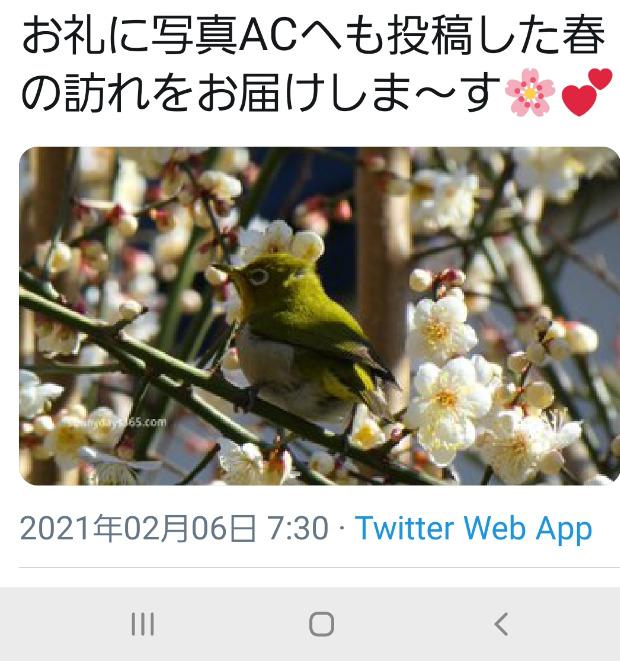 メジロの写真を載せたツイート画面