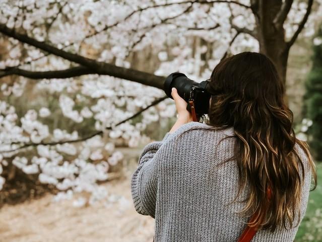 桜の木を撮影している女性カメラマン