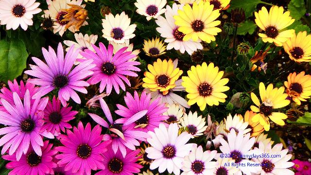 カラフルな色とりどりの花